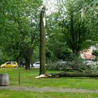 Burmistrzu, drzewa się walą!